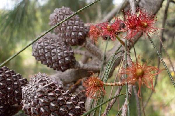 Fleur De Bach Oak Pour Chiens Qui Ne S Arretent Jamais Se Surestiment