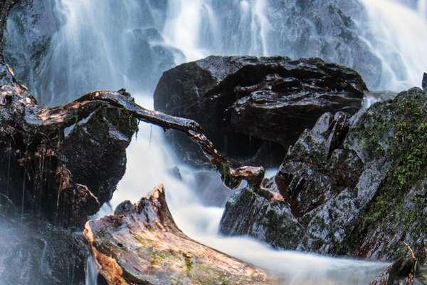 Fleur De Bach Rock Water Pour Chiens Inflexibles Rigides