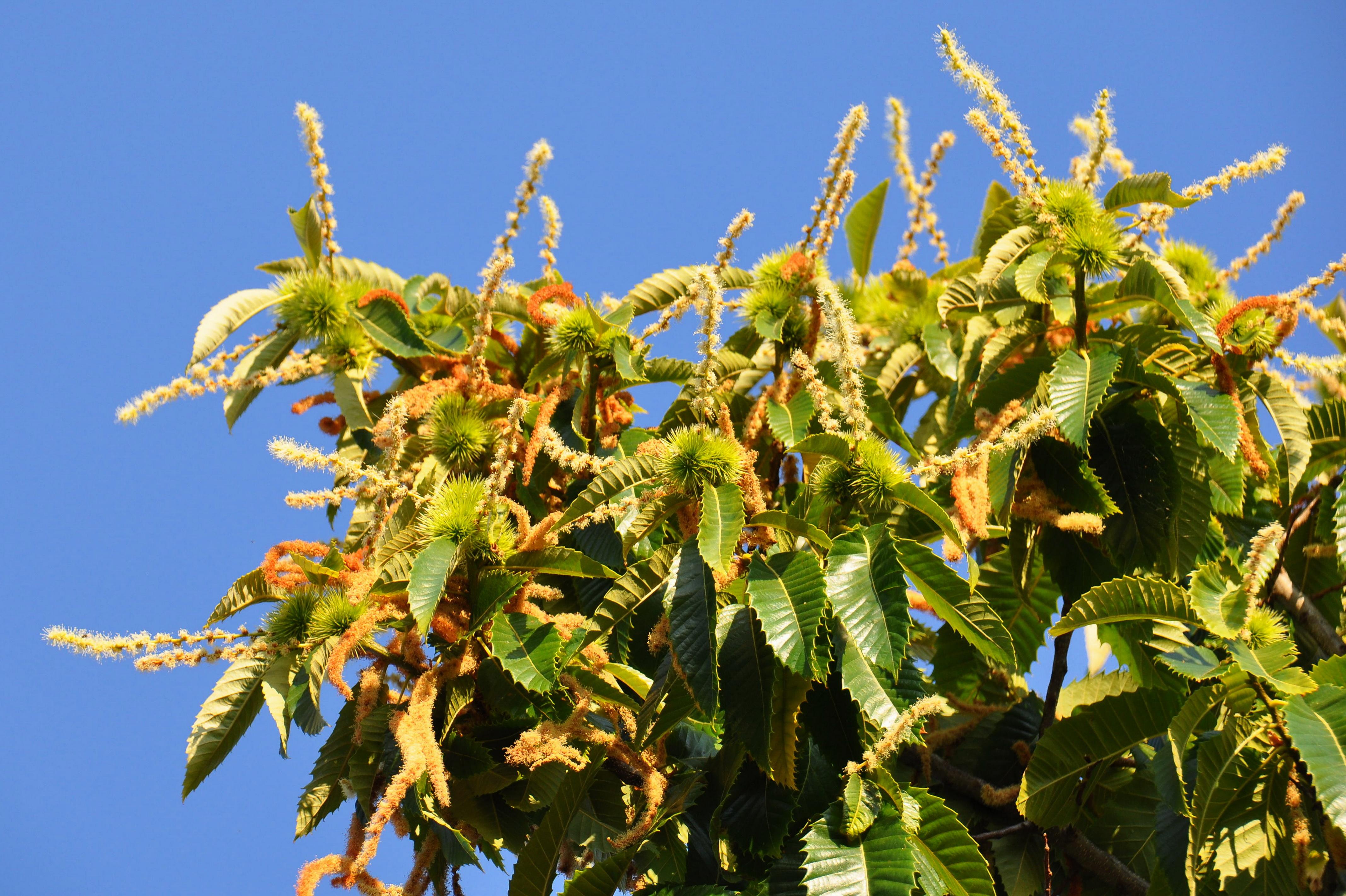 Fleur De Bach Sweet Chestnut Pour Les Chiens En Retrait Sans Espoir