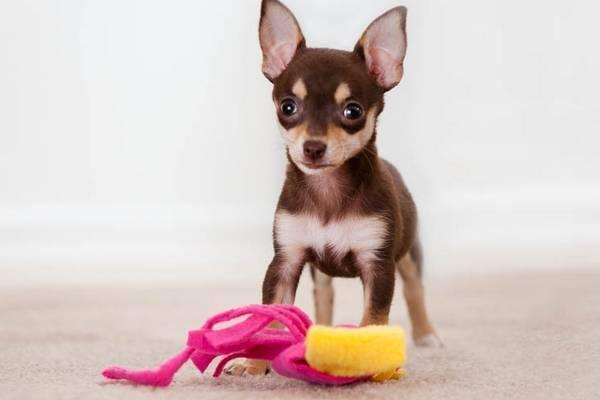 Apprendre au chien l'ordre donne ou lâche