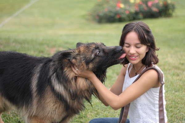 Le chien lèche-t-il son maître pour dire pardon?