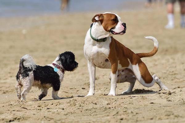 Mon chien pisse partout for Pipi de chien sur carrelage