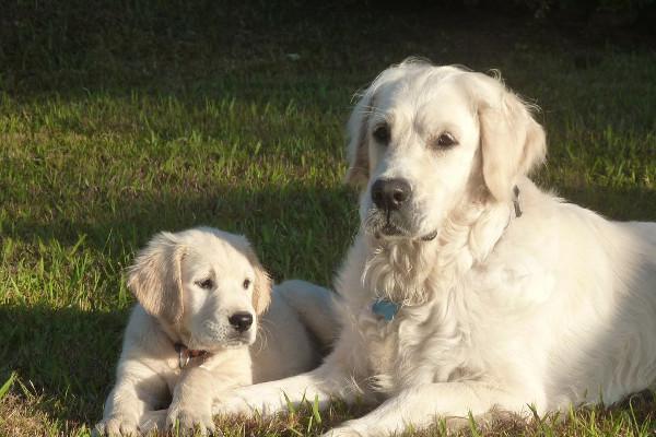 Dressage chien : comment dresser son chien facilement