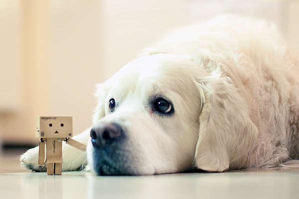 chien vomit jaune avec mousse