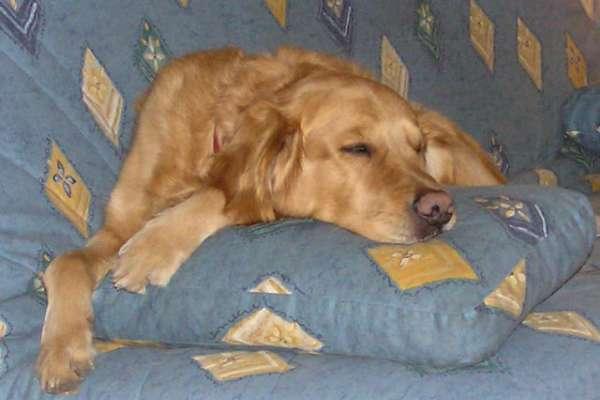 astuce pour enlever les poils de chien. Black Bedroom Furniture Sets. Home Design Ideas