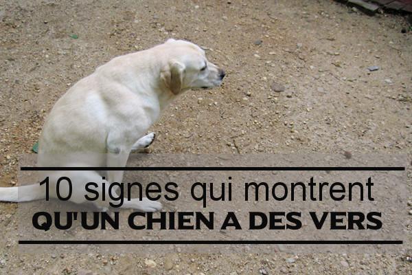 10 Signes Visibles Chez Le Chien Parasité De Vers