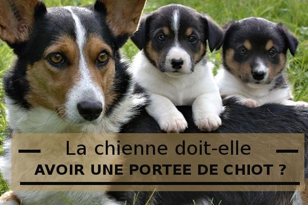 Une chienne doit elle avoir minimum une port e - Temps de portee d une chienne ...