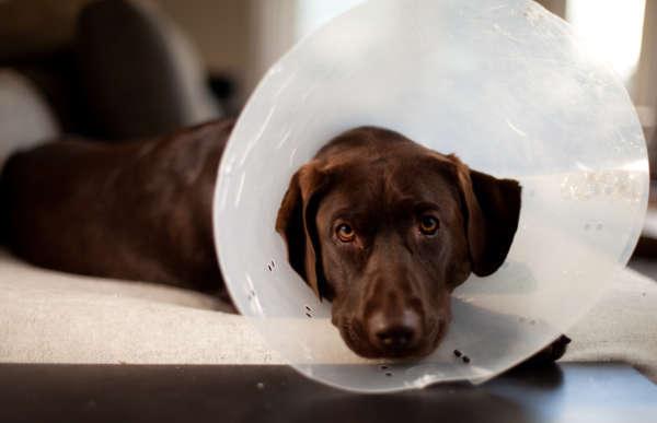 Dog Operation Collar