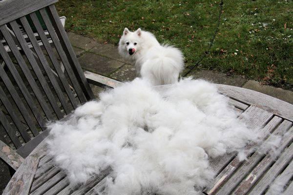 Mon chien perd ses poils - Enlever poil de chien voiture ...