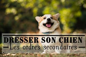 Tout sur les chiens : un site pour les amoureux des chiots