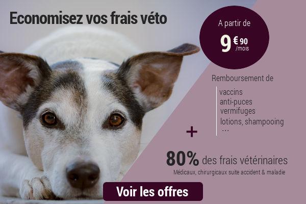 comparer son assurance chien